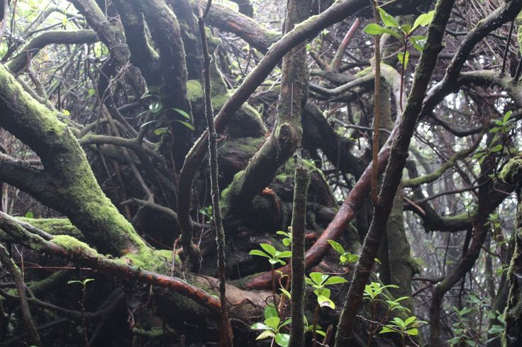 The amazing cloud forest of Poas