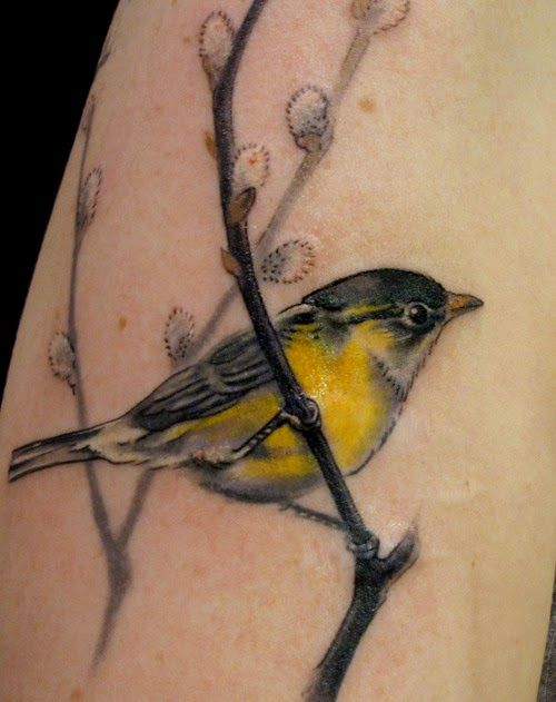 Watercolor tattoo of a finch perched on a branch. Looking for Nate even though he said no