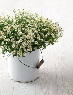 Timelessly pretty little blooms in a white vintage pail. #flowers #gardening #vintage