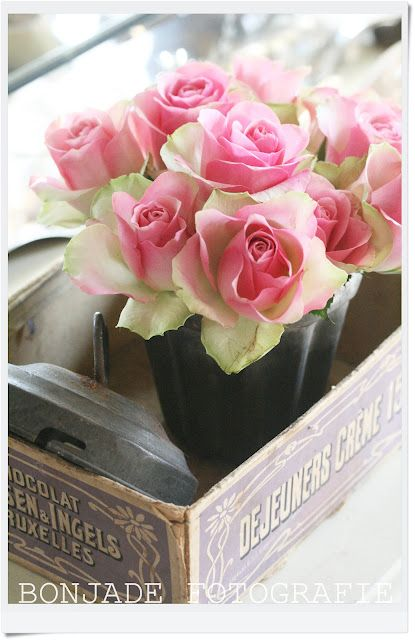 gorgeous! does anyone know the name of these roses?