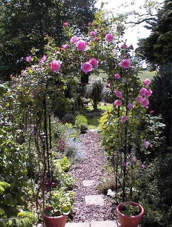 34 best in my rose garden images on Pinterest Garden roses