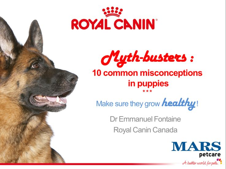 10 common misconceptions in puppies : Q&A from our last webinar of the year ! - Royal Canin Canada Elite Breeders' Club