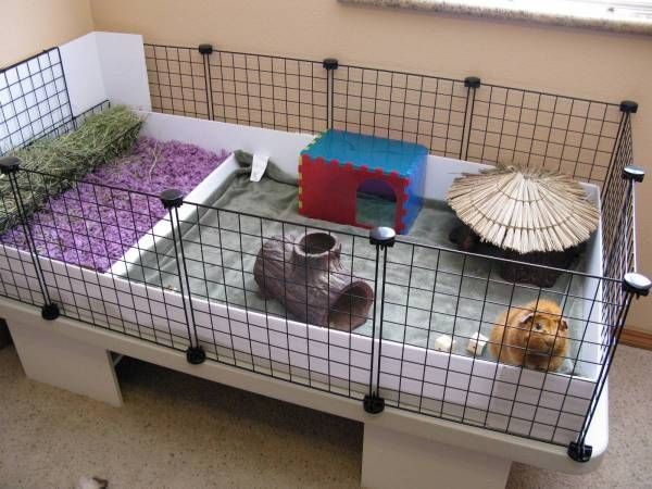 25 best guinea pig cage examples images on pinterest for How to clean guinea pig cages