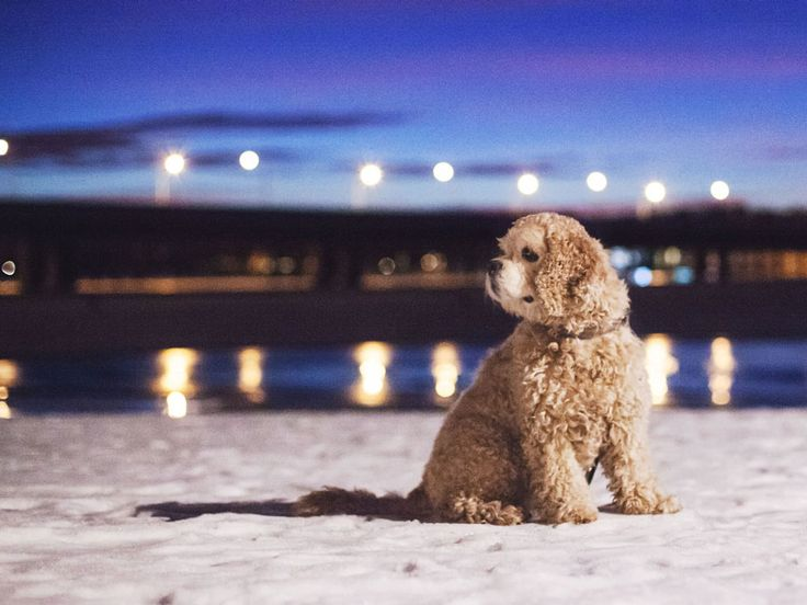 Dog portrait in evening light - Photography by Toast Photos