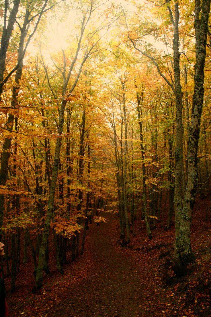 Hayedo de Tejera Negra (Guadalajara): magia otoñal - 18 paisajes de España a los que les sienta bien el otoño