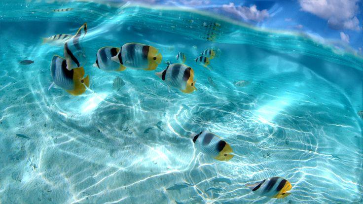 Watery Desktop Animated Wallpaper.