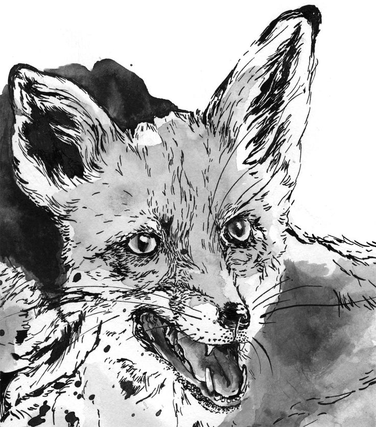 ink drawing fox (detail) by sylvia stølan