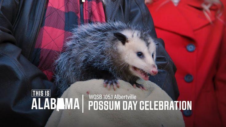 Possum Day: Albertville, AL   This is Alabama