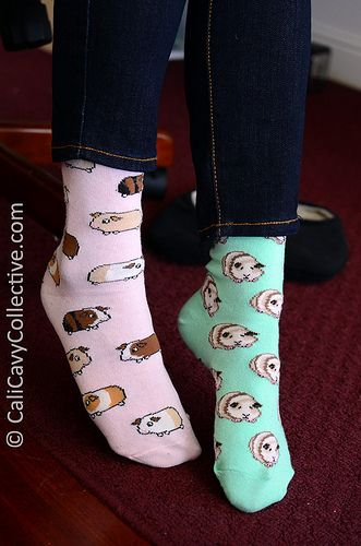 Squee-worthy (or should that be wheek-worthy?) #guineapig patterned socks. Peaches insists that one of them resembles her.