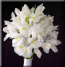 Image result for white iris wedding bouquet