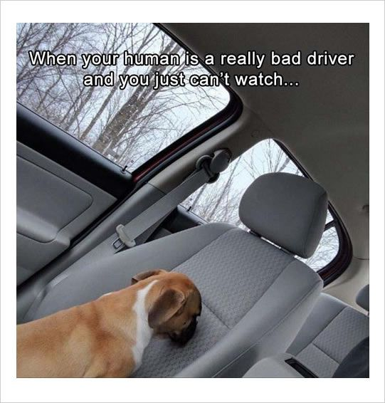 #dogcare