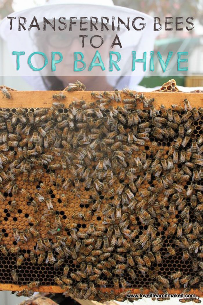 Transferring Bees To Our Top Bar Hive | Love It Learn It Make It #beekeeping #topbarhive