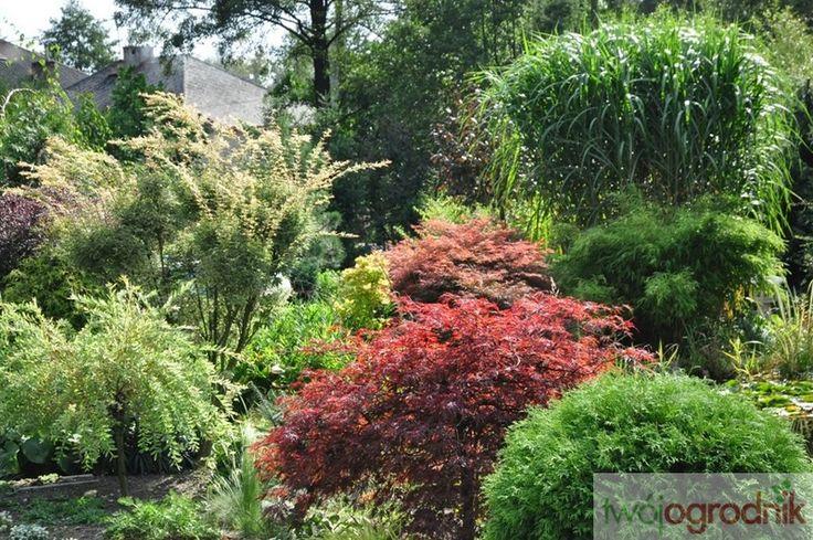 Nad naszym stawem rosną klony palmowe, miskanty olbrzymie oraz wiele bylin o barwnych liściach