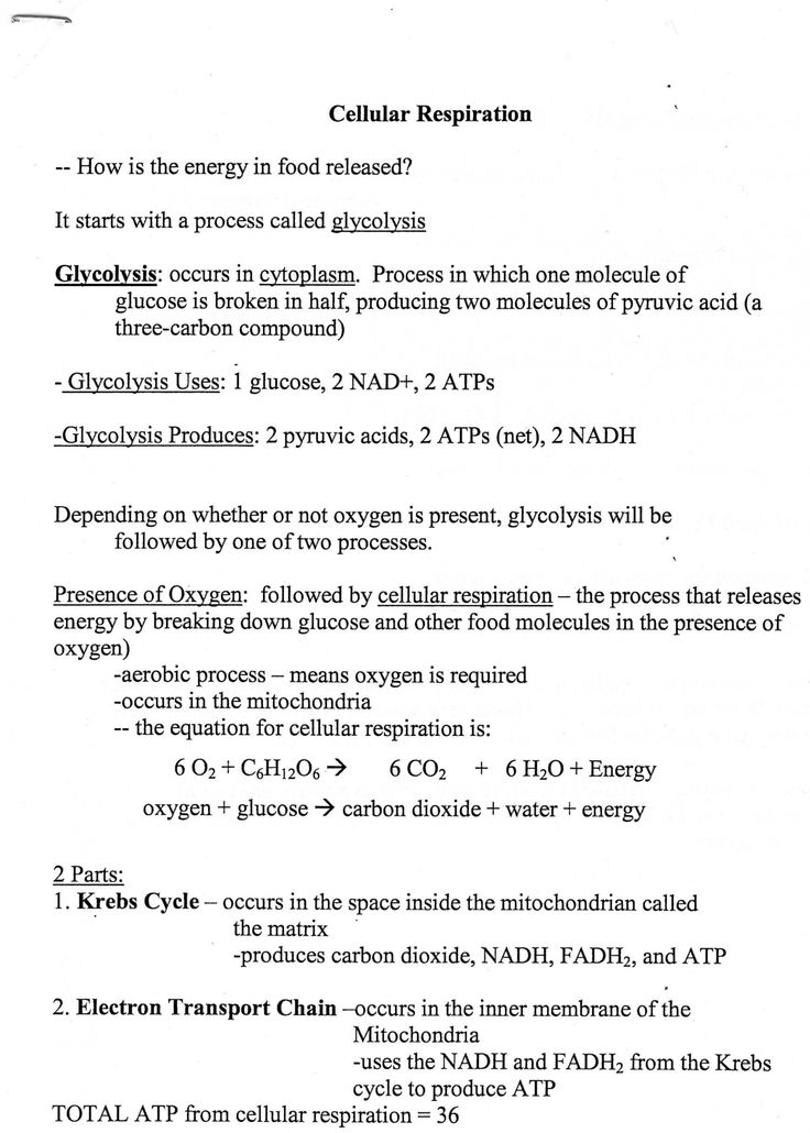 Cellular Transport Worksheet Answer Key Cellular Transport ...