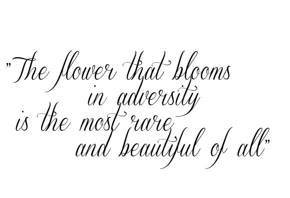 """""""The flower that blooms in adversity is the most rare ... Tattoo in SverigeScript Clean Font 36.13333333333334px"""