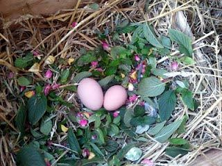 Our Homestead Life: Herbs In Your Chicken Nests???