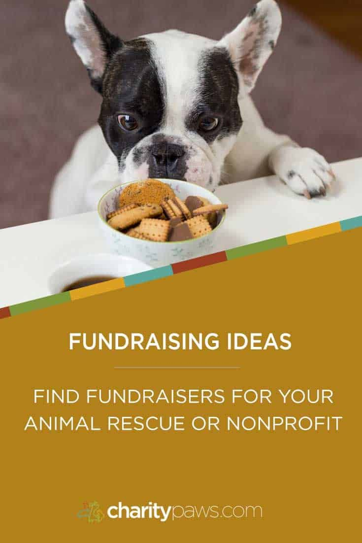 Fundraising Ideas For Animal Rescues To