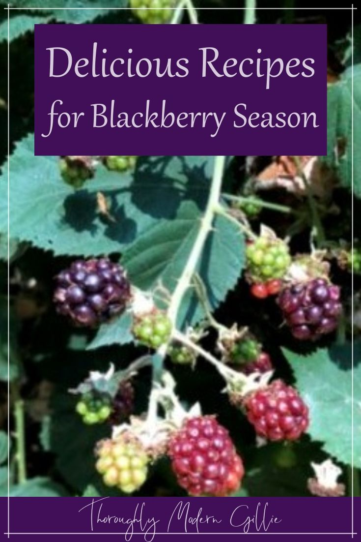 Blackberry season has finally arrived. We can't eat them all straight with sugar and cream. Here are some yummy recipes…