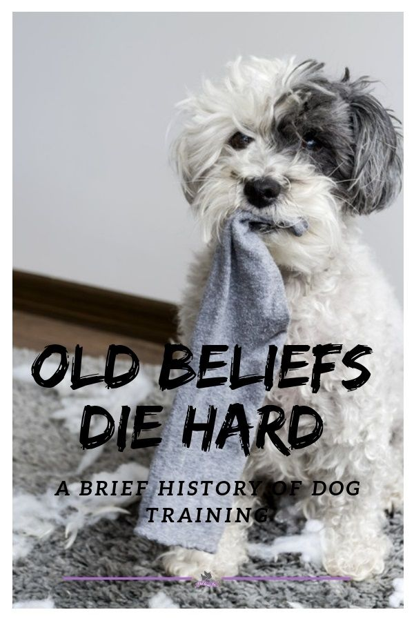 Title A Brief History Of Dog Training Dog Training Dog Care Dogs
