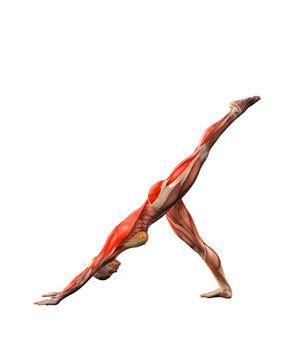 #ADHO MUKHA SVANASANA LEFT/RIGHT LEG UP Yoga Exercises and Workouts: Downward-facing dog pose, left leg up | YOGA.com