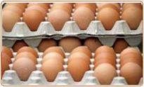 Quality systems is a leading manufacturer of poultry equipments like poultry cage system, poultry environment control system, egg collection & many more poultry solutions.