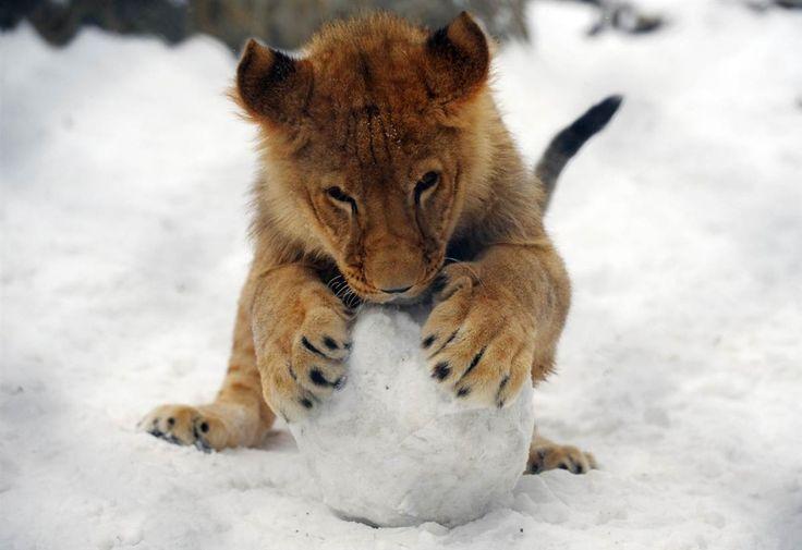 неделю-животных-фотографии-картинки кошки-собаки-смешные животные-котэ_28211043
