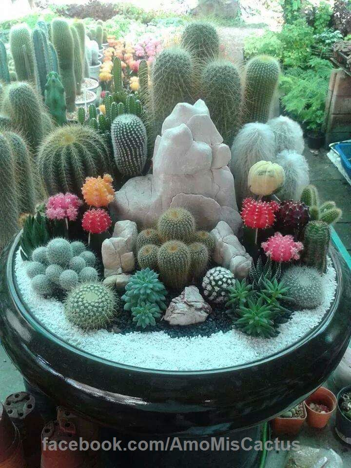 Te gustan los Cactus Raros? Siguenos para ver los cactus mas raros del mundo.
