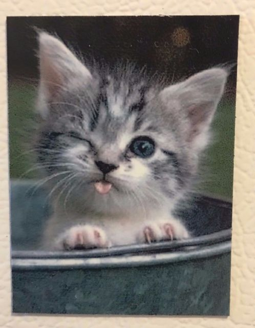 Silly Cat / Kitten winking / sticking tongue out at you Cute cat love pet Magnet