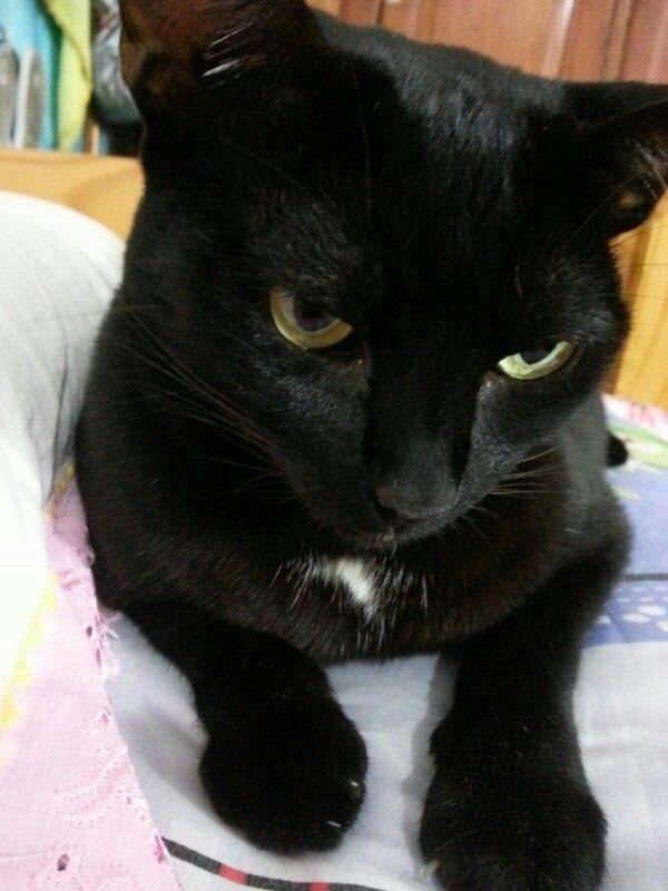 Bebel, a bela gatinha preta