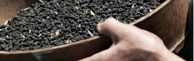 Cece nero della Murgia Carsica - Puglia | I Presìdi Slow Food in Italia | Fondazione Slow Food per la biodiversità ONLUS