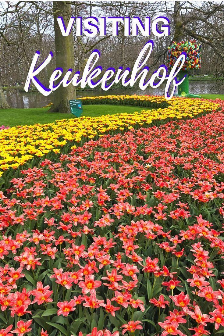 4f205c05b5e909a71138572556838f96 - How To Get To Keukenhof Gardens