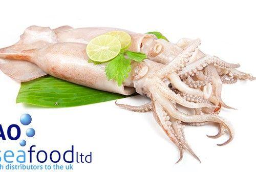Fresh Octopus on sale 10% Off