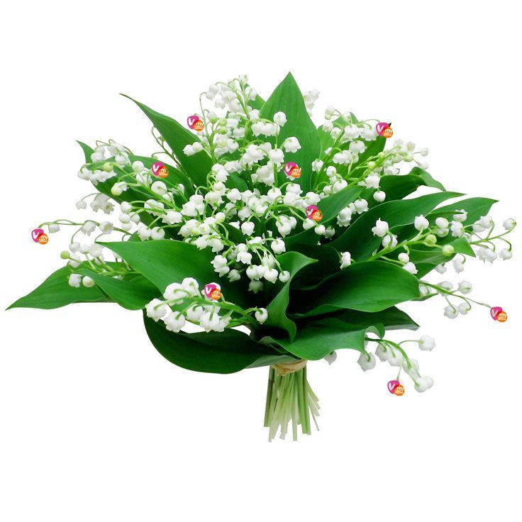 #1mai #muguet #PorteBonheur #JustePourVous #MyPortoVecchio #PortoVecchio #Corse #JustForYou #LuckyCharm #MayDay #PortaFortuna #AmuletoSuerte #Geluksbrenger #clochettes #tradition #Tradizioni #CiCampemu