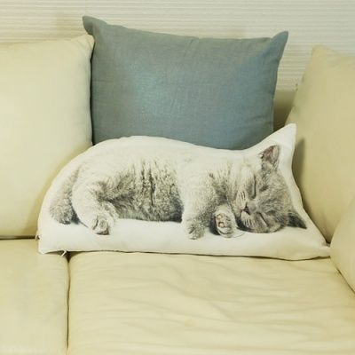 Sleeping cat pillow awe i really like this i might need it even..
