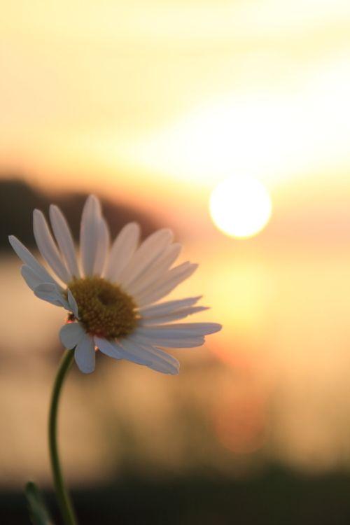 Da oggi traboccherò solo di parole e gesti fatti di vita e bellezza…