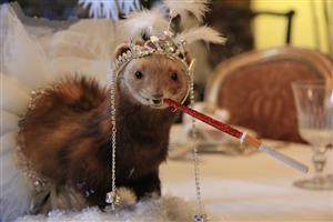Vare: 3196521Enkegrevinde Minkfeldt Laurpels Billi Braz, udsmykket mink af Shane Brox -til fordel for Red Barnet