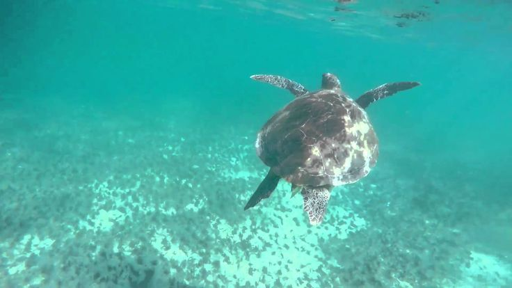 wimming with sea turtles in Akumal bay, Mexico is a thrilling activity one can do absolutely free.
