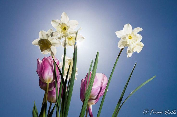 Flowers in Sunlight by Trevor Wintle on 500px
