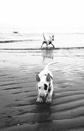 bullies at the beach