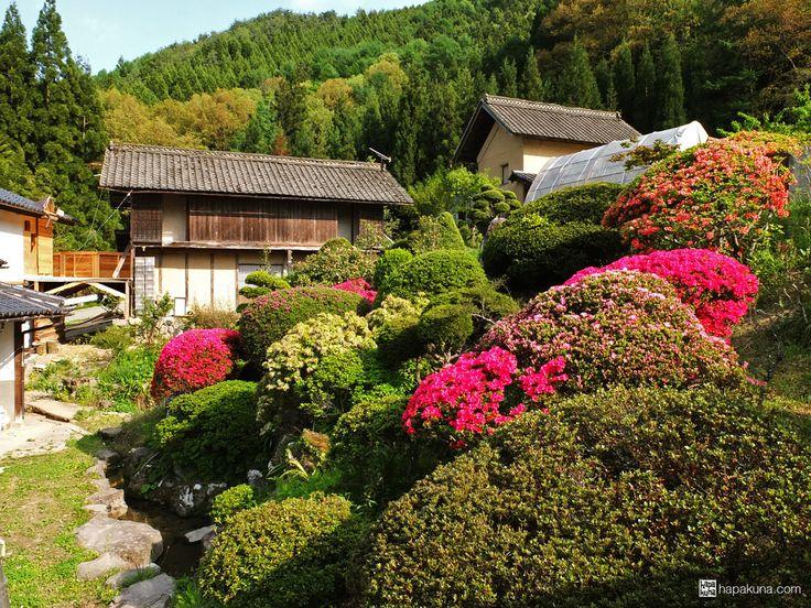 you can read about our helping & farming experience in Japan http://hapakuna.com/blog/blog/2013/08/08/helping-farming-japan-in-slow-motion/  #helpxJapan #hoshinafarm #hapakuna #workexchangeJapan