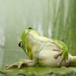 love these frogs.
