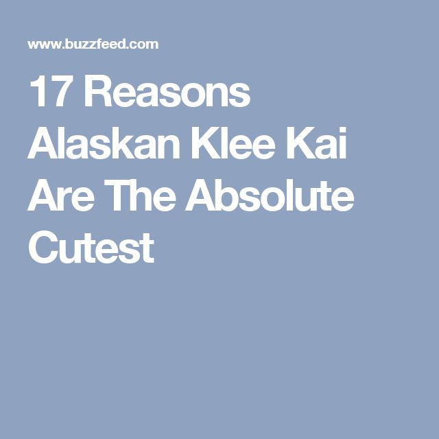 17 Reasons Alaskan Klee Kai Are The Absolute Cutest
