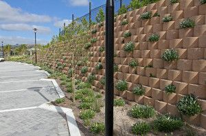 Hardy, indigenous plants add a soft, green element to the wall