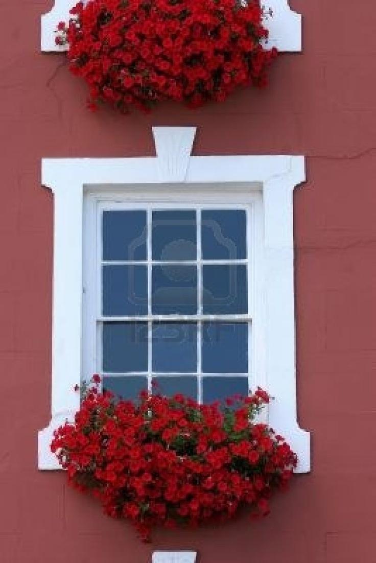 Fiori rossi in una finestra caselle bianche sotto le finestre sulla parte anteriore di una casa.   Archivio Fotografico