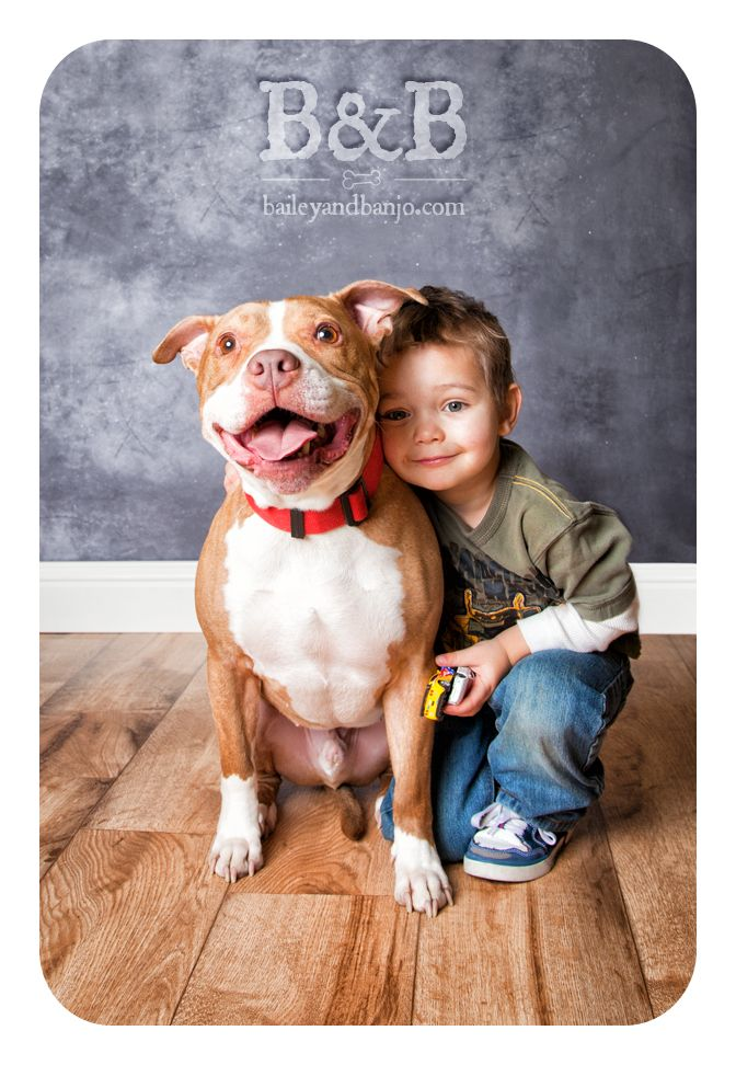 Best 25+ Pitbull Photos ideas on Pinterest | Pictures of ...