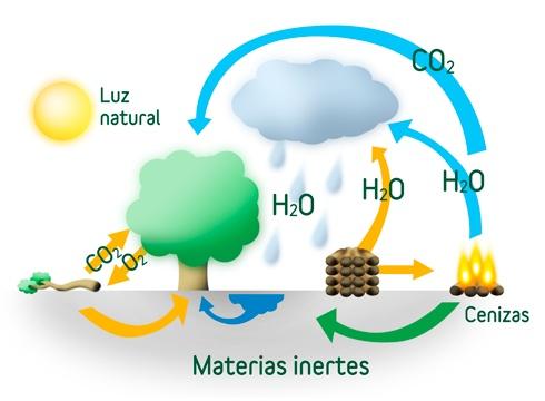 Biomasa forestal frente a otras fuentes de energía fósiles.  La biomasa forestal posee diversas ventajas frente a las energías fósiles:  Respeta el medioambiente, ya que tiene un balance neutro de emisiones de CO2.  Provoca la reducción de gases de efecto invernadero a través de la sustitución de combustibles fósiles.  Gestionada de manera sostenible, es una fuente de energía abundante e inagotable.  Su uso reduce nuestra dependencia energética de las fuentes de energía fósiles y…
