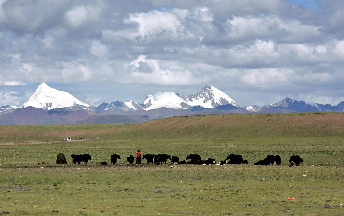 China will use solar power to melt the permafrost in Nagqu, a near-polar climate in Tibet, so that trees can grow in the region.