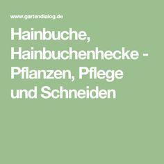 Hainbuche, Hainbuchenhecke - Pflanzen, Pflege und Schneiden