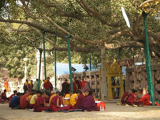 Bodh Gaya, India  Site of the Buddha's enlightenment under a bodhi tree