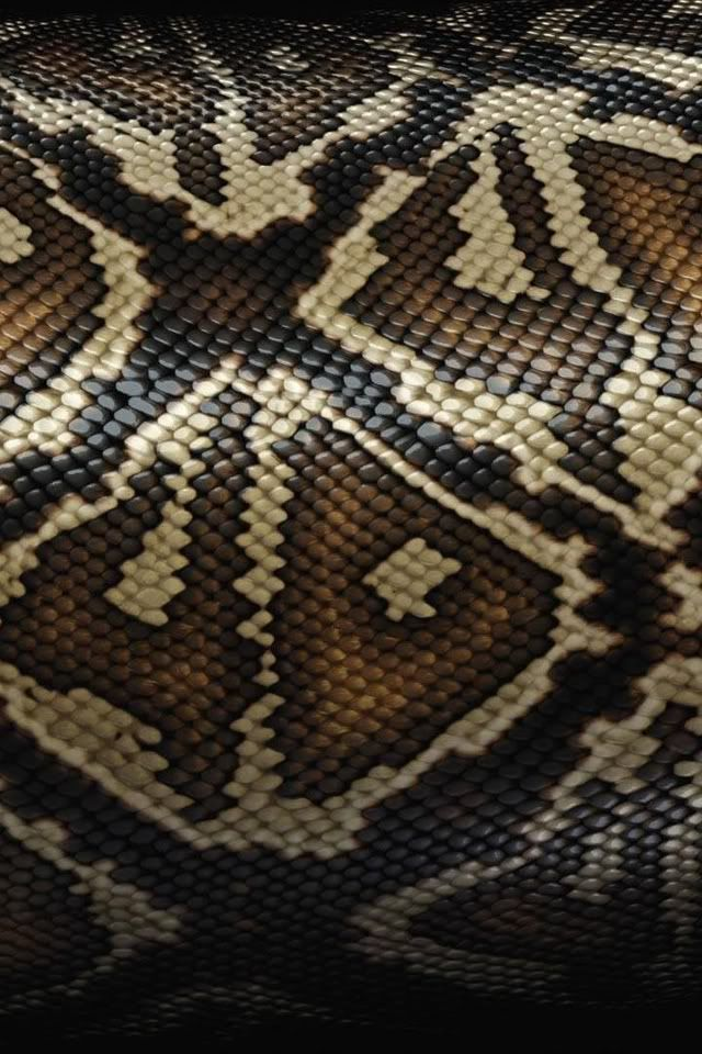 snake skin texture iPhone wallpaper | iphone wallpapers 2 ...